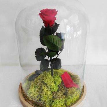 Cúpula rosa  Preservada